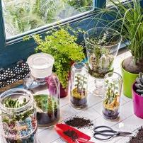decorar_plantas_9307_600x600