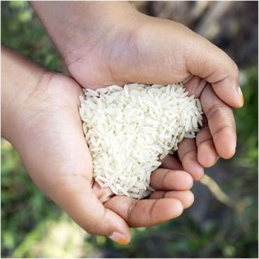 arroz_1