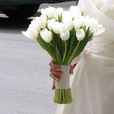 tulipan_6