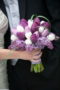 tulipan_8