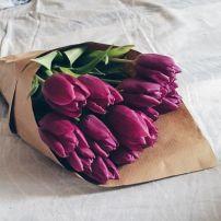 tulipan_9